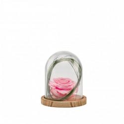 Cloche Rose Stabilisée Rose Décorative Sur Socle Bois - 13 Cm