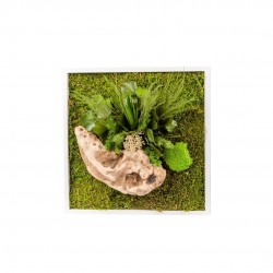 Tableau Végétal Nature Carré 35 X 35 Cm